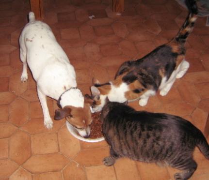 dogcats.jpg